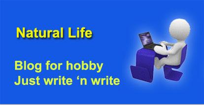 blog-nikorudy